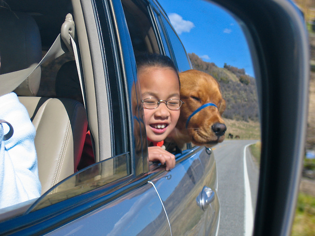 Chinese-American girl and her golden retreiver with heads out the car window, model release #96