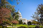Colored foliage frames the United States Capitol, Washington, DC, USA
