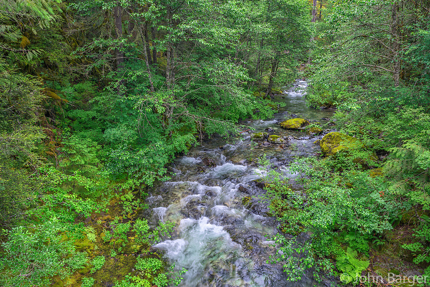ORCAN_D126 - USA, Oregon, Willamette National Forest, Opal Creek Scenic Recreation Area, Battle Ax Creek with surrounding lush forest.