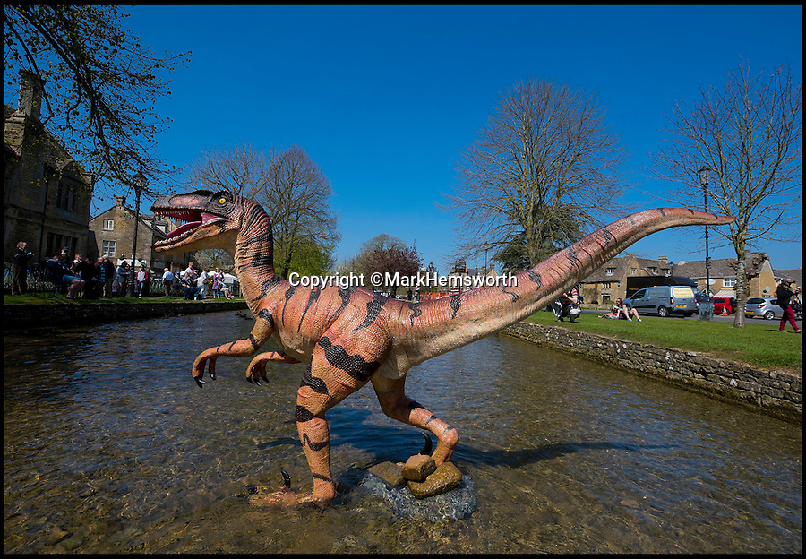 BNPS.co.uk (01202 558833)<br /> Pic: MarkHemsworth/BNPS<br /> <br /> A dinosaur making its way through Bourton-on-the-Water's river.<br /> <br /> Visitors to one of Britain's oldest villages are used to seeing historic sights but many couldn't believe their eyes when a herd of life-sized dinosaurs descended on the picturesque settlement.<br /> <br /> The group of model dinosaurs made a startling sight as they made their way through Bourton-on-the-Water in Gloucestershire while on their way to the nearby Birdland attraction where they will form part of a new display.<br /> <br /> Some people looked on curiously as a velociraptor crossed the village's historic stone bridge while a cearadactylus in the River Windrush also caused some bemusement.
