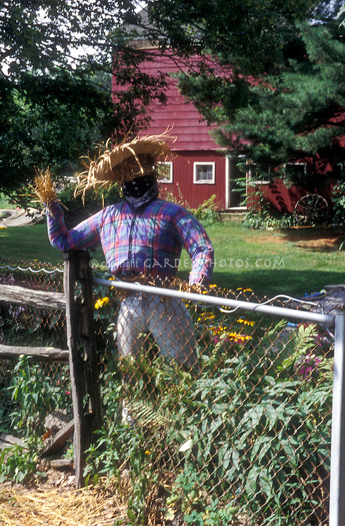 Scarecrow, red barn, fence, welcoming hello to the farm garden