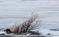 Winter landscape of a Willow bush at the shore of Turnagain Arm with a slow exposure of the ice and water of the Arm flowing by in Southcentral, Alaska.  <br /> <br /> <br /> <br /> Photo by Jeff Schultz/SchultzPhoto.com  (C) 2017  ALL RIGHTS RESVERVED