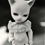 portrait of the munchkin cat