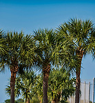 28 February 2019: Palm trees are seen at the St. Louis Cardinals Spring Training facility at Roger Dean Stadium in Jupiter, Florida. Mandatory Credit: Ed Wolfstein Photo *** RAW (NEF) Image File Available ***