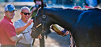 BALTIMORE, MD - MAY 17: Trainer Mark Casse, center, talked with his son Norm as Classic Empire gets a bath after exercising in preparation for the Preakness Stakes this Saturday at Pimlico Race Course on May 17, 2017 in Baltimore, Maryland.(Photo by Scott Serio/Eclipse Sportswire/Getty Images)