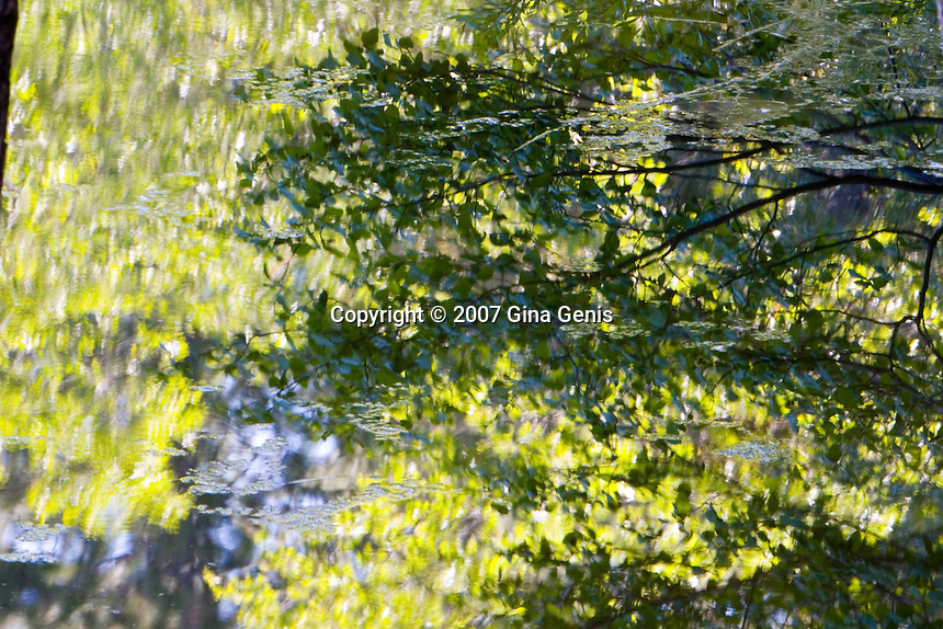 Reflections of branches and leaves in Lake Fulmor