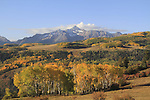 Wilson Peak with aspen trees in fall foliage,  San Juan Mountains near Telluride, Colorado, USA.