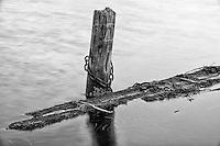 Old Piling on Mller Bay, Washington