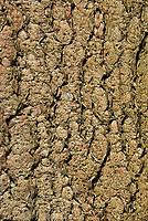 DEU, Deutschland, Bayern, Niederbayern, Nationalpark Bayerischer Wald, Baumrinde, Borke | DEU, Germany, Bavaria, Lower-Bavaria, National Park Bavarian Forest, bark
