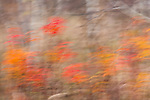 Abstract of fall color in Wisconsin