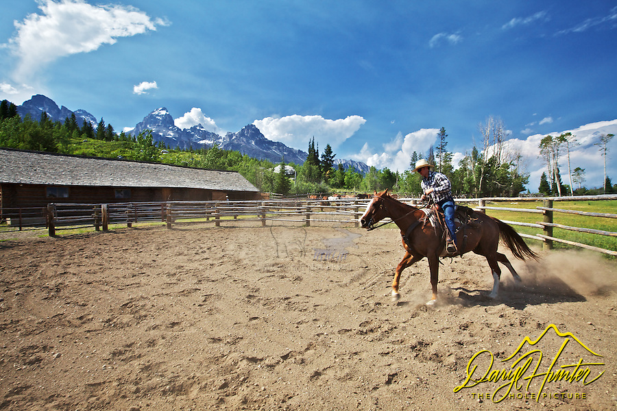 Young cowboy puts a sorrel gelding through his paces in a round pen below the Grand Tetons.