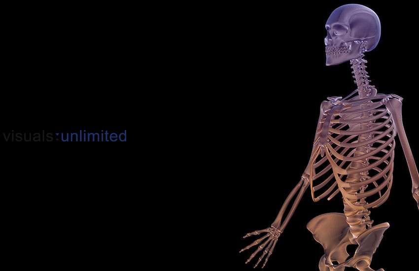 An anterolateral view (left side) of the bones of the upper body. Royalty Free