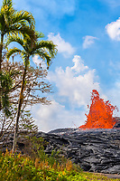 lava from Kilauea Volcano erupts from a fissure on Pohoiki Road, close to palms and ferns growing just outside of the Puna Geothermal Ventures power plant, near Pahoa, Puna, Big Island, Hawaii, USA