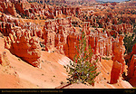 Queen's Garden and Fairyland Hoodoos from Sunset Point, Bryce Canyon National Park, Utah
