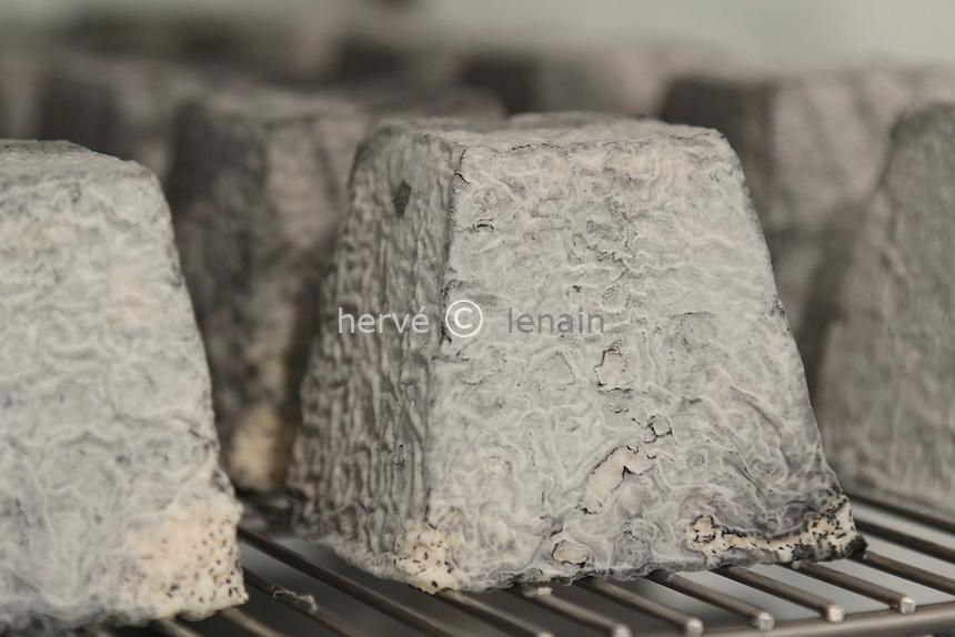 France, Indre (36), Frédille, fromage de chèvre Valençay (AOP) de la ferme du Champ de l'Étang // France, Indre, Fredille, Valençay goat cheese