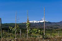 Blick auf Etna bei Linguaglossa, Weinbau, Sizilien, Italien , UNESCO-Weltnaturerbe