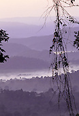 Para State, Brazil. Misty rainforest in dawn light with hanging vegetation in silhouette; Serra dos Carajas.