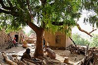 MALI Dogon Land , Dogon village with clay architecture at the Falaise which is UNESCO world heritage, Neem tree  / MALI, etwa 20 km südoestlich von Bandiagara verlaeuft die rund 200 km lange  Falaise , UNESCO Welterbe, eine teilweise stark erodierte Sandsteinwand bis zu 300 m Hoehe  , hier befinden sich viele Dogon Doerfer in Lehmbau Architektur