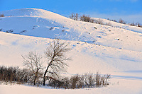 Trees and snow<br /> Qu'Appelle Valley near Craven<br /> Saskatchewan<br /> Canada