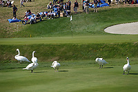 Swans on 18 during the final round of the Porsche European Open , Green Eagle Golf Club, Hamburg, Germany. 08/09/2019<br /> Picture: Golffile | Phil Inglis<br /> <br /> <br /> All photo usage must carry mandatory copyright credit (© Golffile | Phil Inglis)