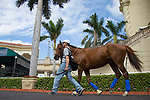 HALLANDALE BEACH, FL-JAN 25: Collected schools in the paddock in between races as horses prepare for the Pegasus World Cup Invitational at Gulfstream Park Race Track on January 25, 2018 in Hallandale Beach, Florida. (Photo by Kaz Ishida/Eclipse Sportswire/Getty Images)