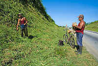 Men hard at work cutting grass by the side of a rural road, Cuba.