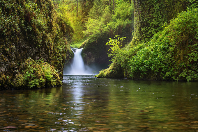 Soft light highlights lush greens, Punchbowl Falls.