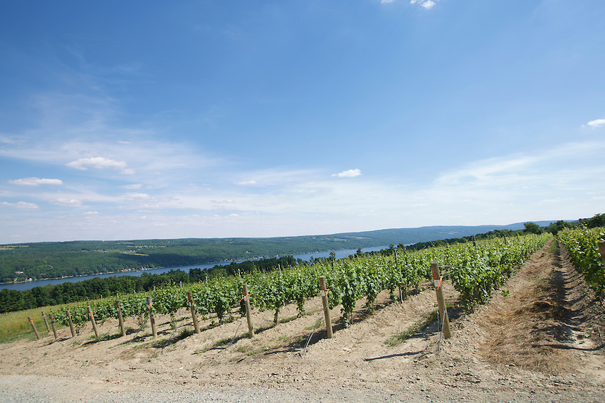 Hammondsport, NY - June 19, 2016: The New York Wine and Grape Foundation bring New York City sommeliers and wine buyers to the Finger Lakes region as part of its NY Drinks NY program.<br /> <br /> CREDIT: Clay Williams.<br /> <br /> &copy; Clay Williams / claywilliamsphoto.com