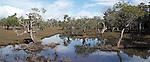 Coastal Wetlands - Yamba NSW