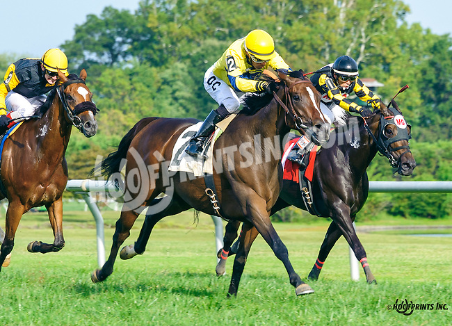 Ancient Goddess winning at Delaware Park on 9/21/16