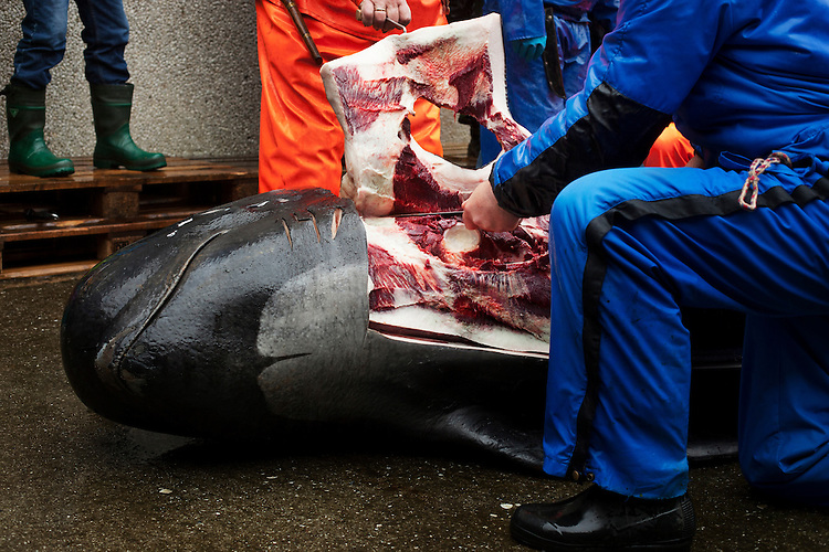 A pilot whale's blubber is cut off  to begin its slaughter at the Seaman's Day celebration in Klaksvík on August 21, 2010.  After a kill, the meat and blubber of the pilot whales is divided up between everyone in the community.  Although whale once made up a large part of the Faroese diet, growing concerns over mercury levels and changing cultural tastes means that people are consuming significantly less of it today.