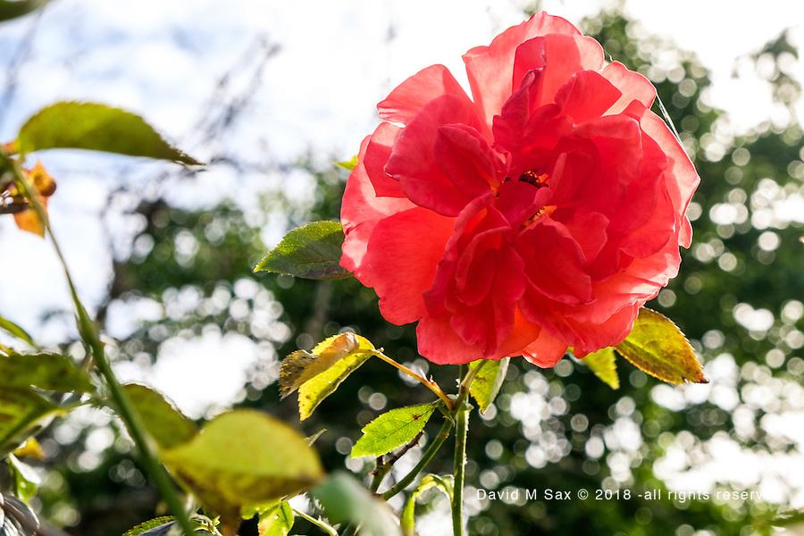6.2.16 - In Full Bloom...