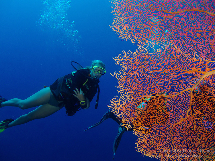 Blue Corner, Palau -- Gorgonian sea fan and diver.