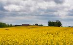 Kwitnące łąki w okolicach Węgorzewa