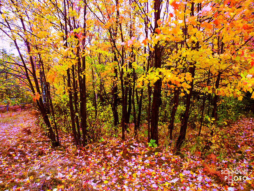 Fall color in the northwoods of Wisconsin.