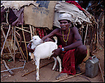 Samburu man and  his goat  near,  Maralal Northern Kenya .
