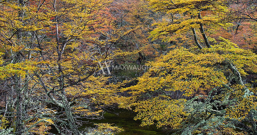 We were fortunate the spend time in Torres del Paine when the autumn colors were still in peak form.