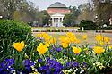 Baldwin Auditorium on East campus quad with Tulips, springtime