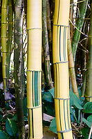 Painted bamboo stalks at the Allerton Gardens in Lawa'i, South Shore of Kaua'i.