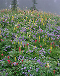 Mount Rainier National Park, WA:   Fog blankets a meadow of alpine wildflowers including lupine, western anemone and paintbrush