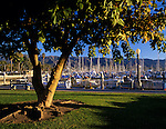 Santa Barbara at sunset with Santa Barbara harbor marina with trees along the Pacific Ocean and Santa Ynez Mountain Range in background Santa Barbara California USA