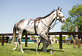 Slip Away strikes a majestic pose in the paddock before his 2011 debut over the flat at Mineral Springs.