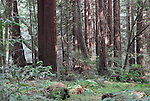 Forest of Nisene Marks State Park