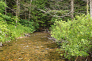 Birch Island Brook in Lincoln, New Hampshire USA near Ice Pond