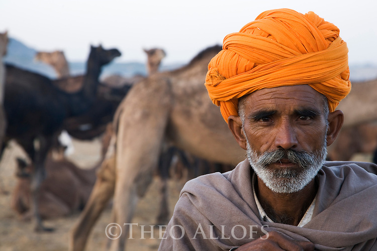Scene at selling grounds of Pushkar camel fair; camel owner with camels;.The annual Pushkar camel fair is one of the main tourist attractions in India, Pushkar, Rajasthan, India --- Model Released
