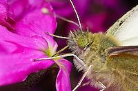 Butterfly in a Wallflower