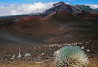 Young Silversword plants dot the landscape of HALEAKALA NATIONAL PARK on Maui in Hawaii