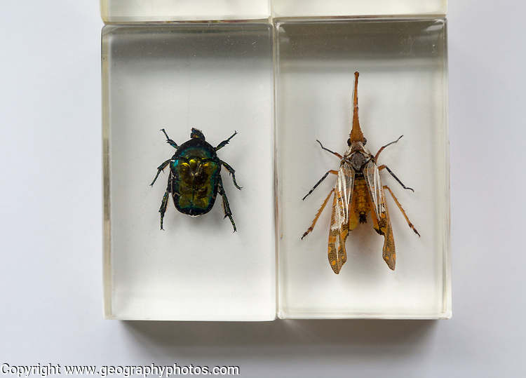Close up of exotic insects in clear resin blocks