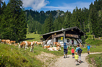 Deutschland, Bayern, Chiemgau, Ruhpolding: Wanderer an der Miasei Alm unterwegs zur nah gelegenen Brandner Alm | Germany, Bavaria, Chiemgau, Ruhpolding: hiking along alpine pasture Miasei Alm towards mountain restaurant Brandner Alm