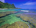 Kauai, HI: Reef and green waters of Manniholo Bay at low tide with Makana peak in the distance, Kauai's north shore